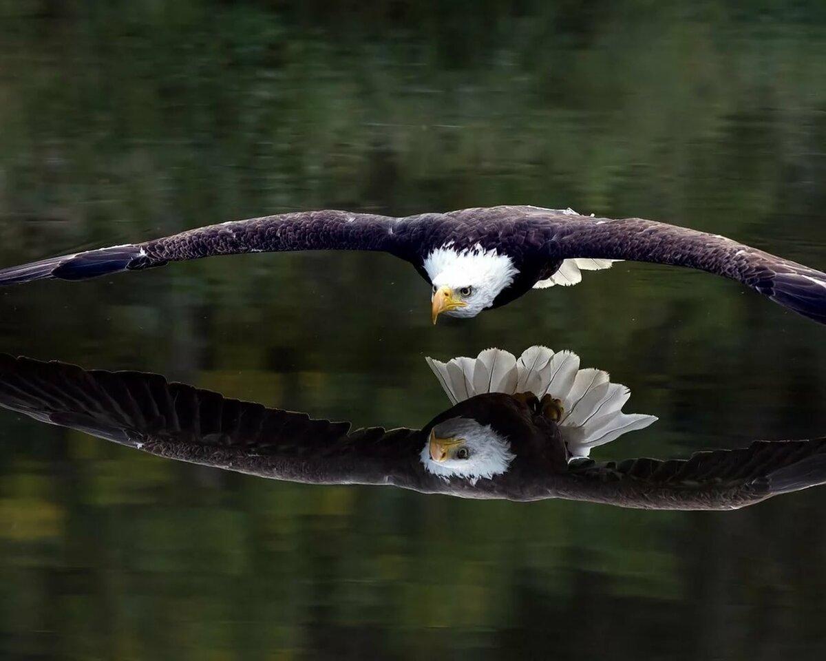 Горихвостка птица фото как составить
