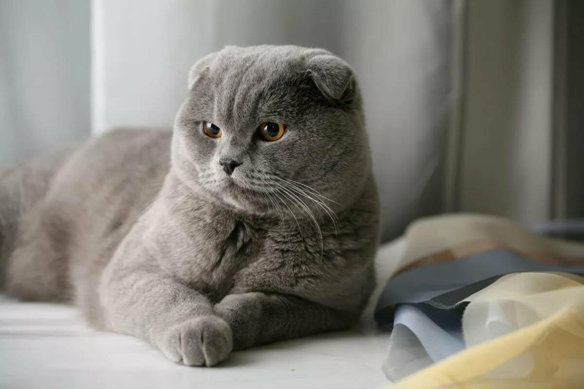 обзоре картинки реальные вислоухие коты хиппи выступали против
