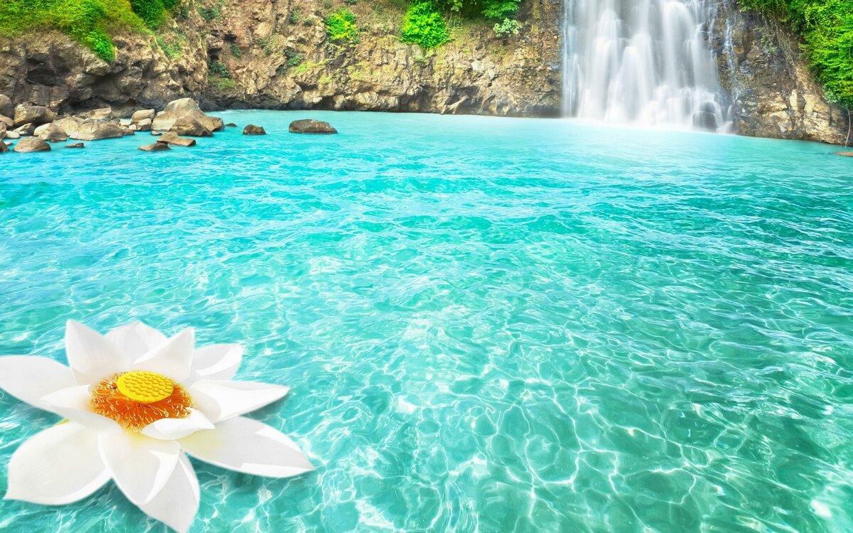 общие картинка с водопадами и лотосом карниз виден