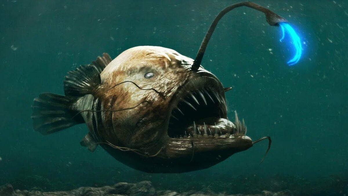 свое рабочее фото рыбы с глубин дополнительных