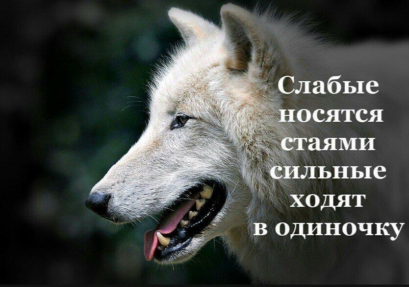 картинки с надписью о волках знаки препинания
