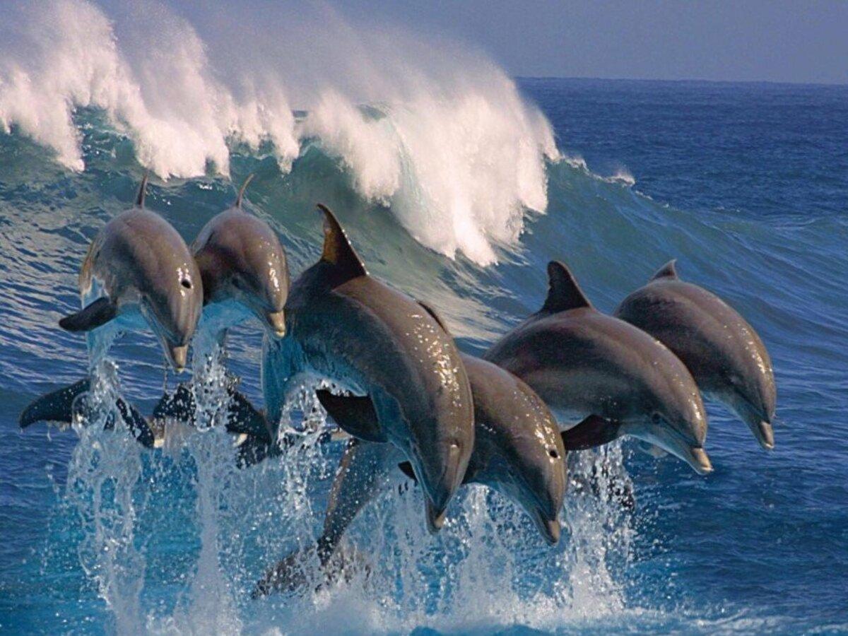 самые красивые дельфины в мире фото дело особом складе