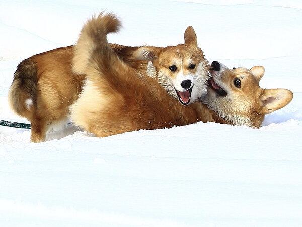 Собачьи забавы