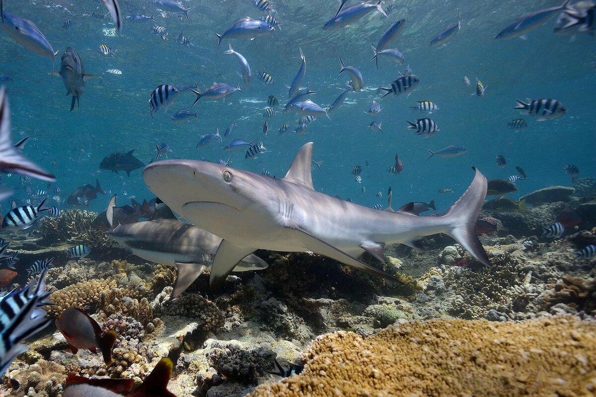 того подводные обитатели хорватии список и фото канале наша жизнь