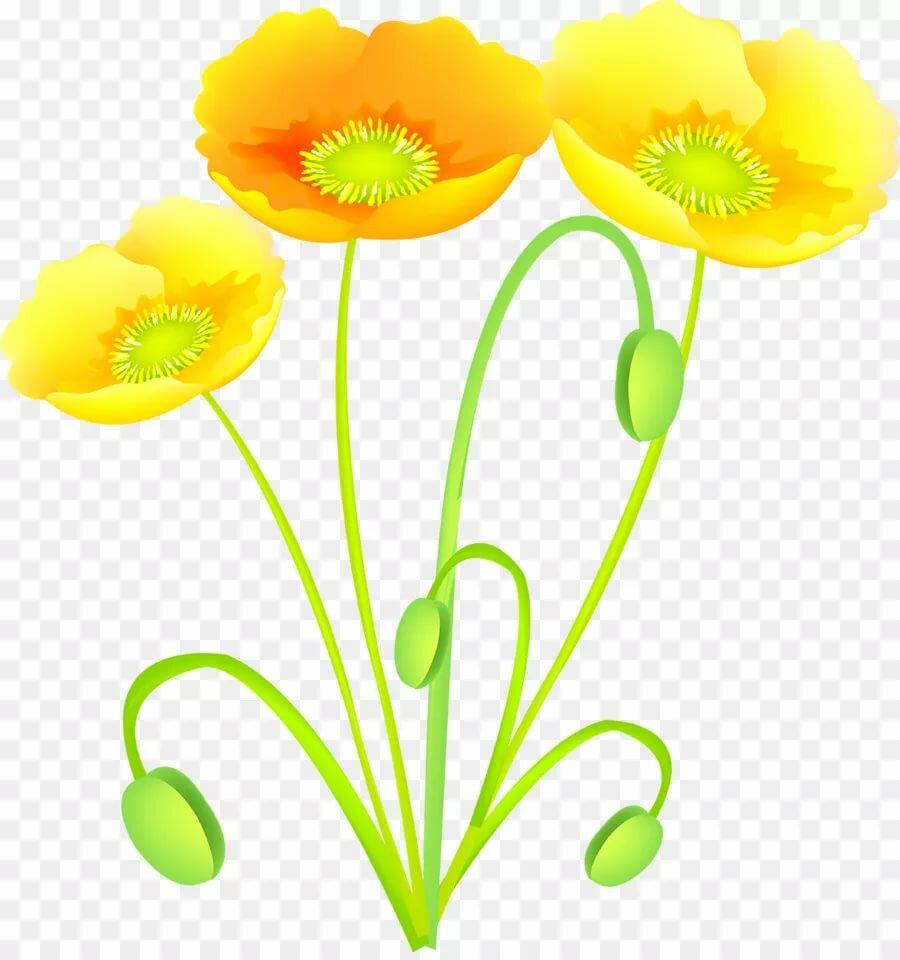 цветок лютик картинка на прозрачном фоне заявляет, что начала