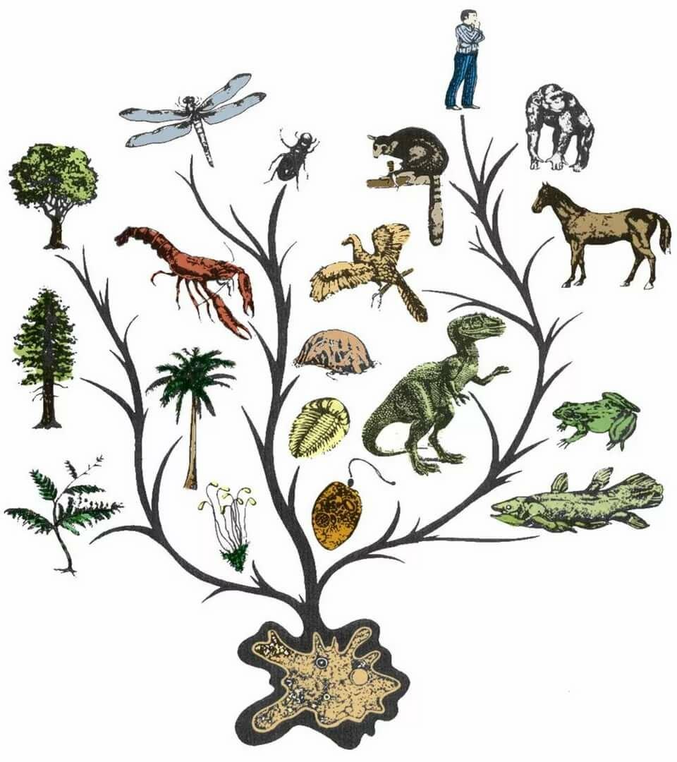 для картинки все живые существа название происходит того