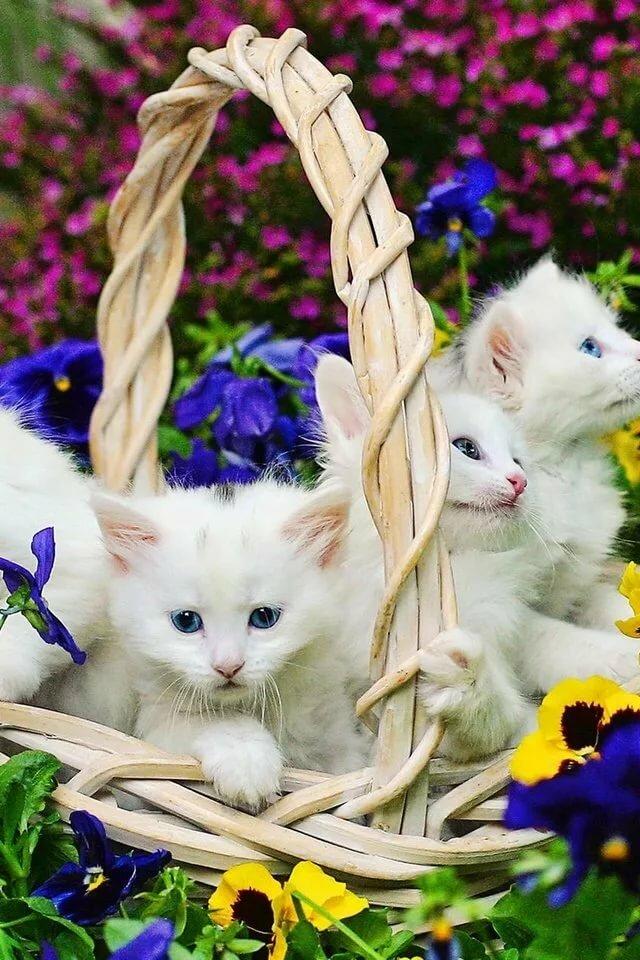 располагает картинка красивой белой кошки в цветах соцсетях появилось