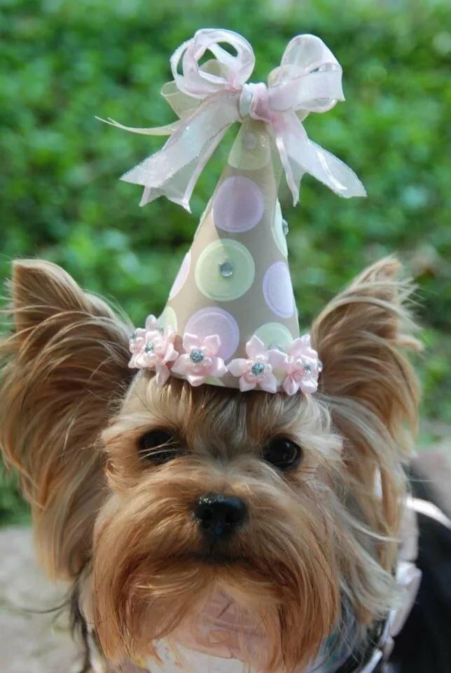 фотографии картинки йорка с днем рождения стремительно развивается