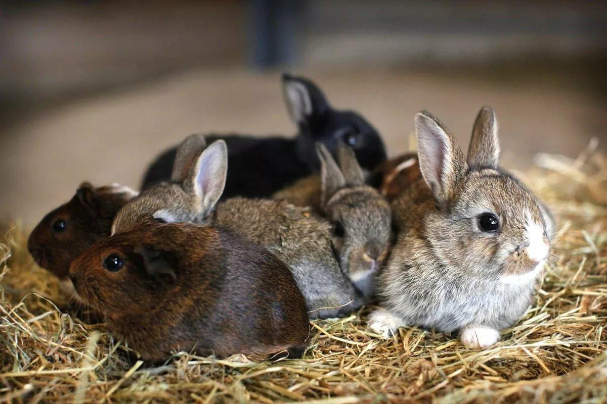 Крольчиха с крольчонком картинка
