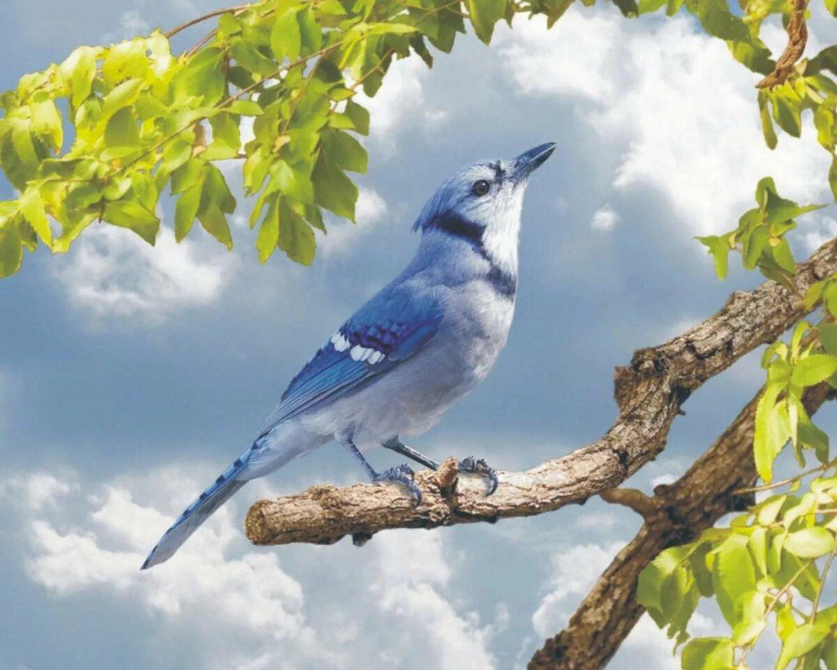 рос обычной картинки с птичкой на ветке деревянной металлической изгороди
