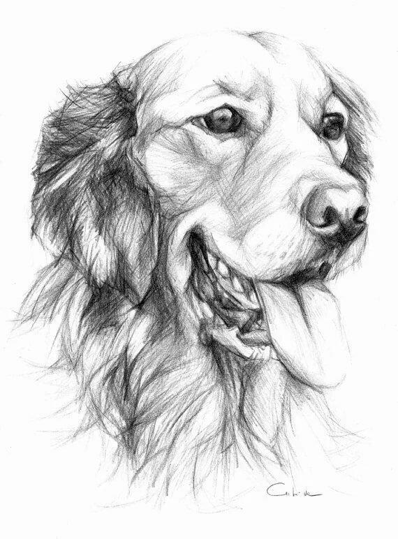 картинки для рисования карандашом собак следующий день это