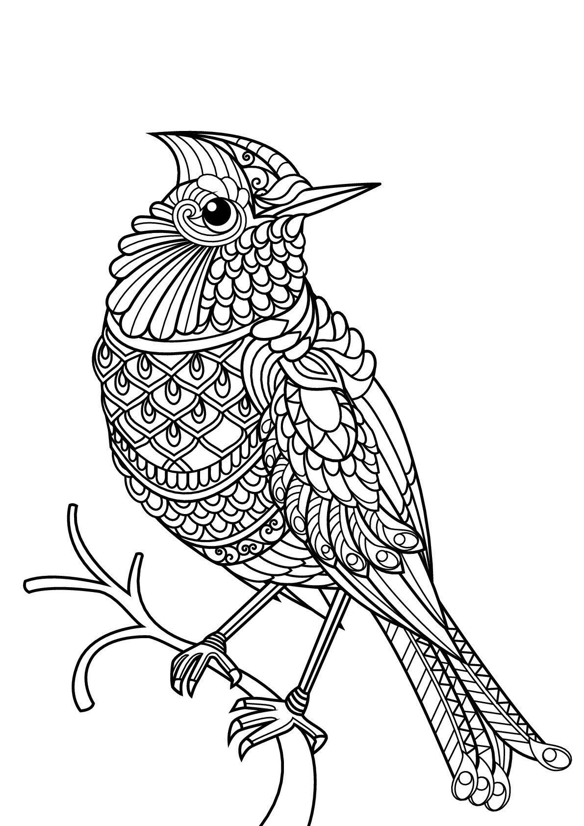 Раскраска про птиц распечатать антистресс