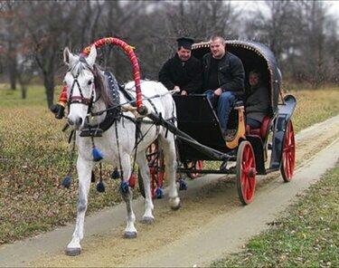 прогулочные повозки для лошадей