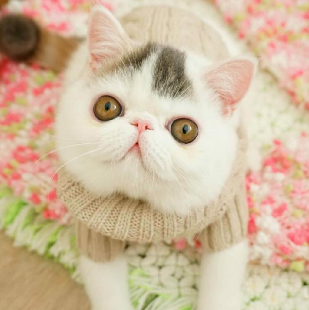 Картинки котов красивые и милые