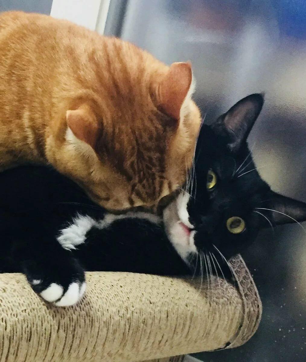 Кусающие котята картинки