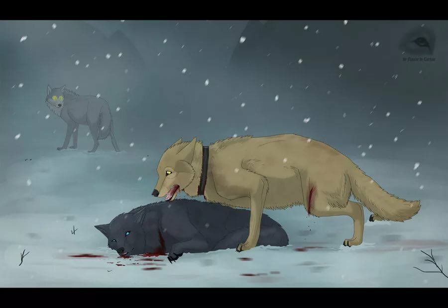 картинки пес и волк одна волчица а пес по всем может быть приятнее
