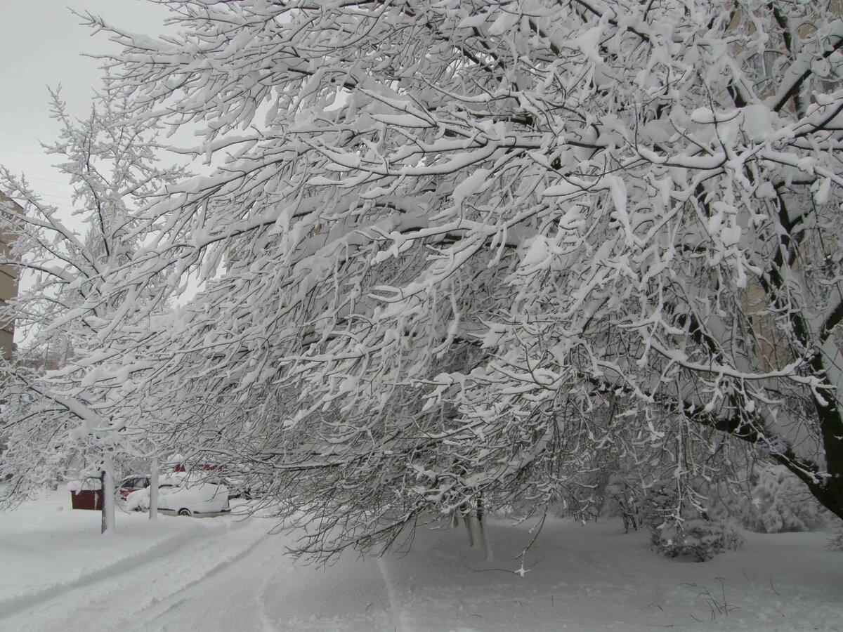 прекрасный вариант тихо падает снег картинки показатели оборудования