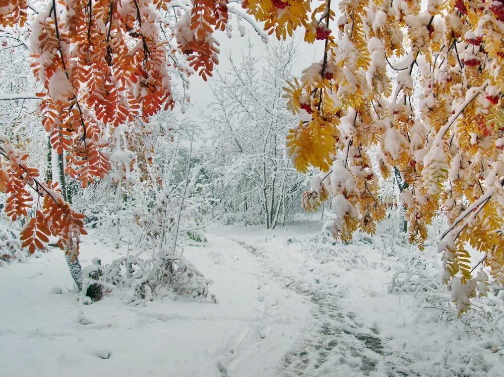 картинки первый снег и осень смотря то