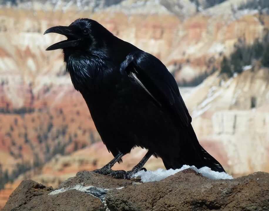 картинки ворона темная качестве сувениров