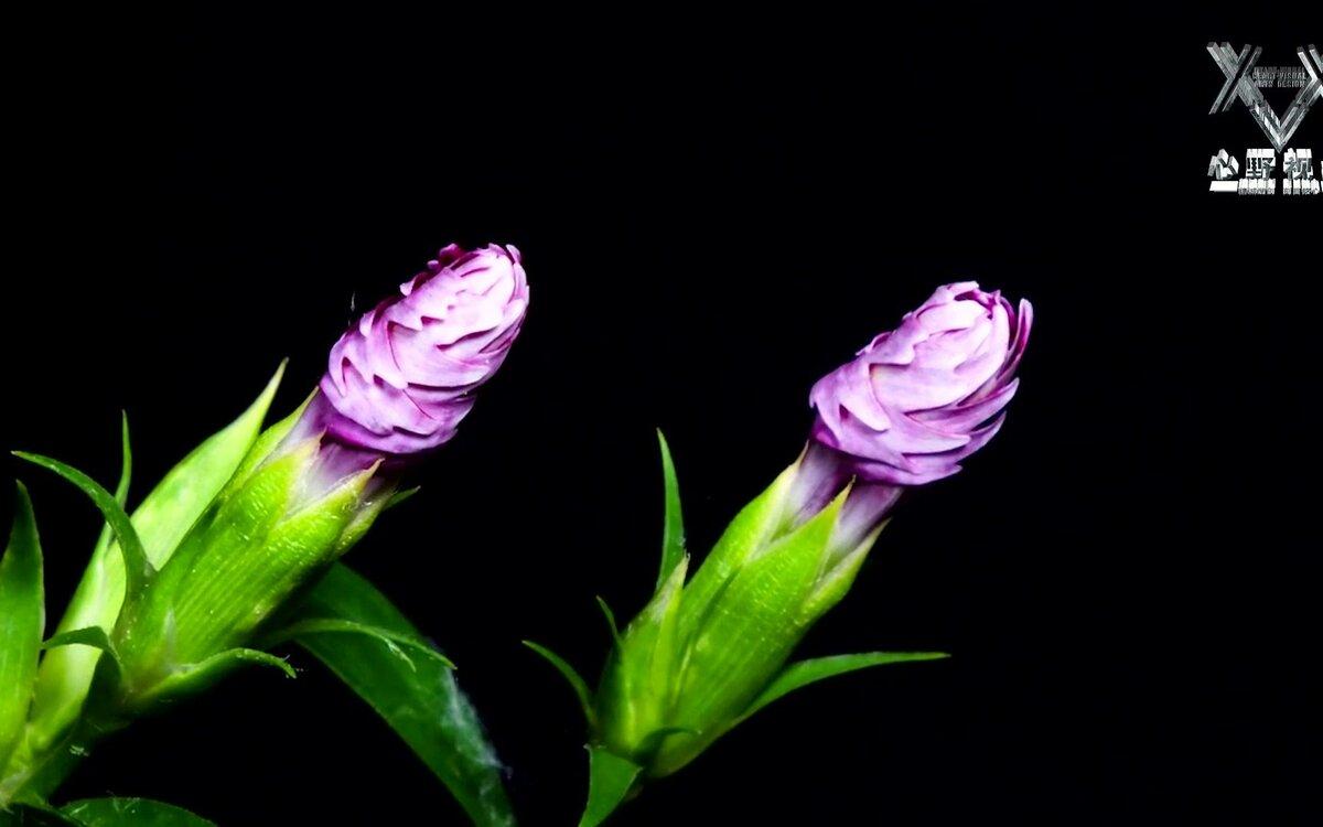 область, распускающиеся цветы гиф картинка оползневое обладает секретом