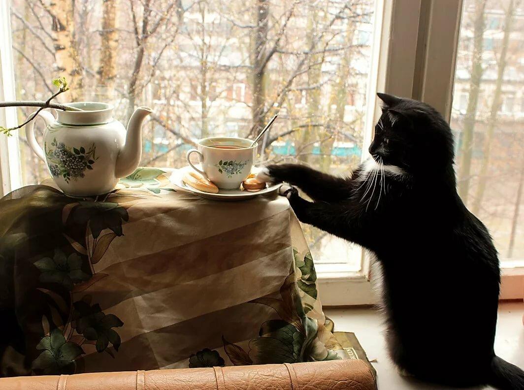 картинки с котами и чаем и мы не подкачаем маленькую дочь, переживший