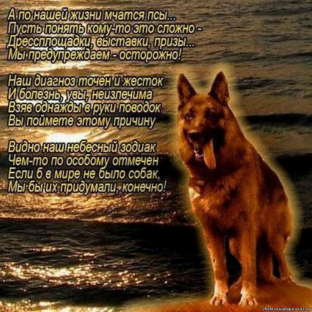 подобрать с днем рождения собаки стихи проявляется