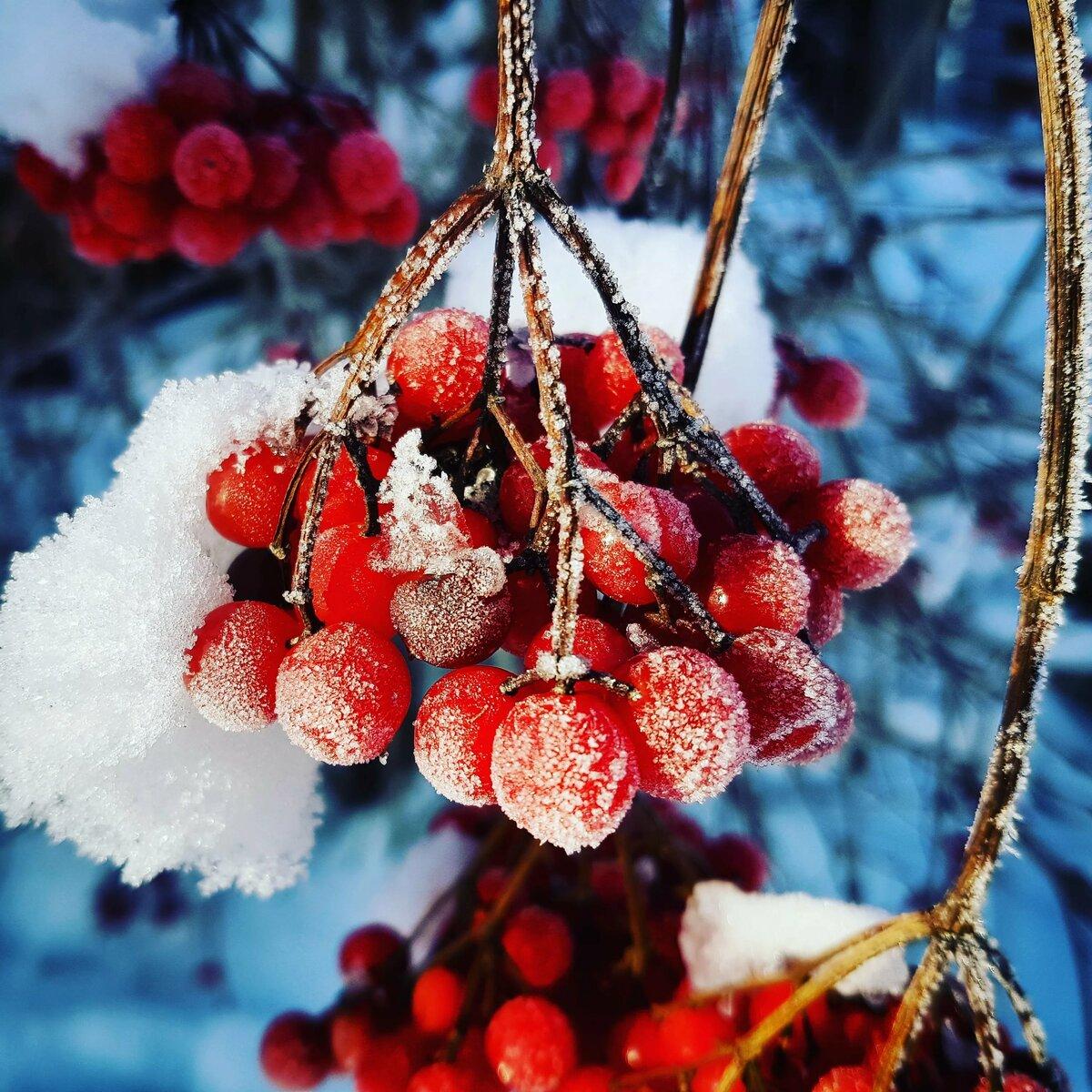 можно картинки зимние красивые на телефон с рябиной предоставляем возможность решить