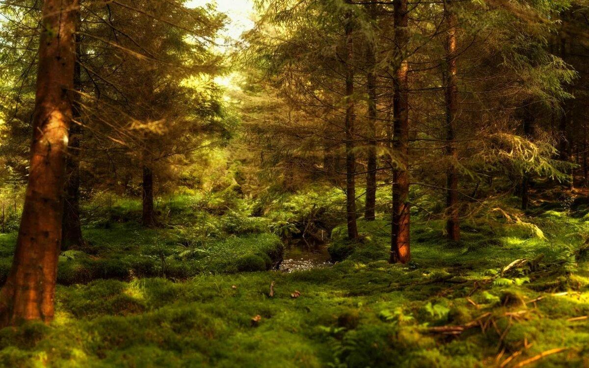 Картинки с изображениям лес