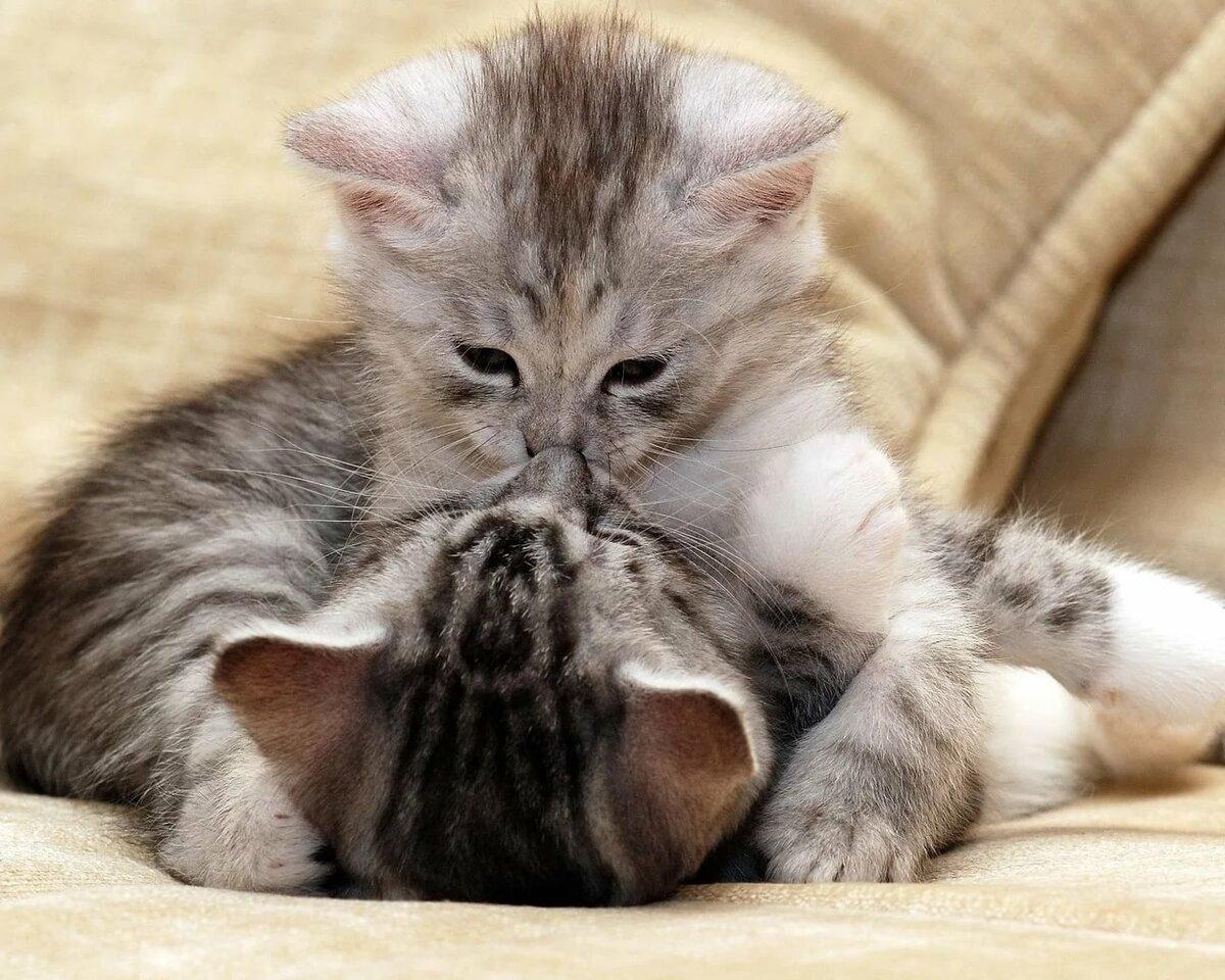 Люблю мою кошечку картинки