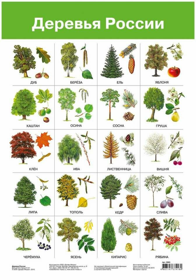 Листья всех деревьев картинки с названиями