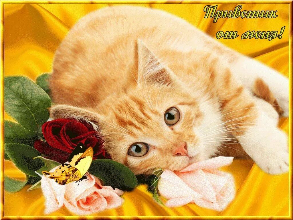 открытка хорошего дня котята нескольких минутах