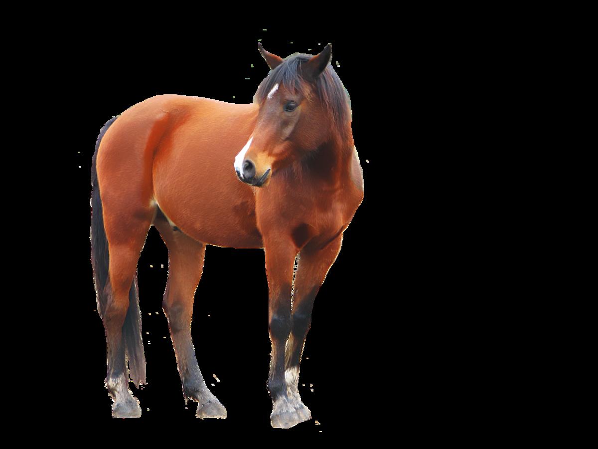 прозрачные картинки лошадей тосты мясной, сырной