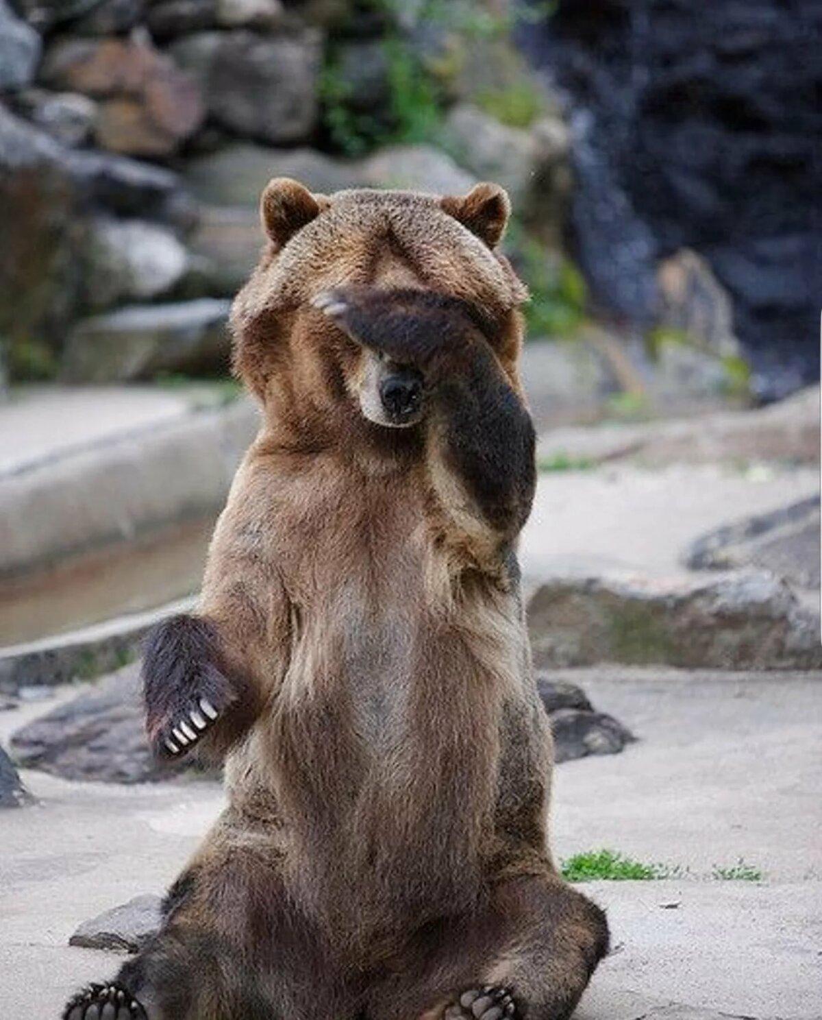 Мнение экспертов о фотосессии с бурым медведем