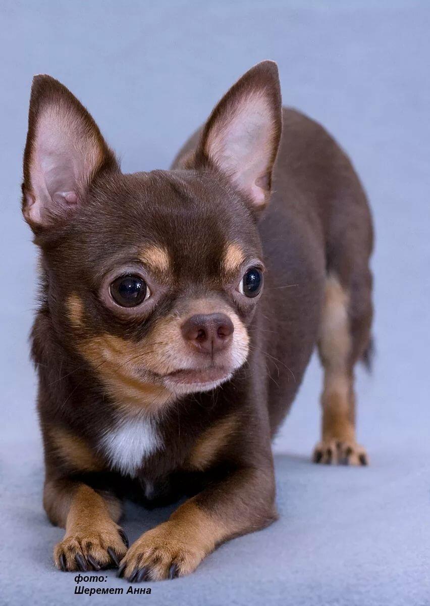 Мелкие собаки фото с названиями