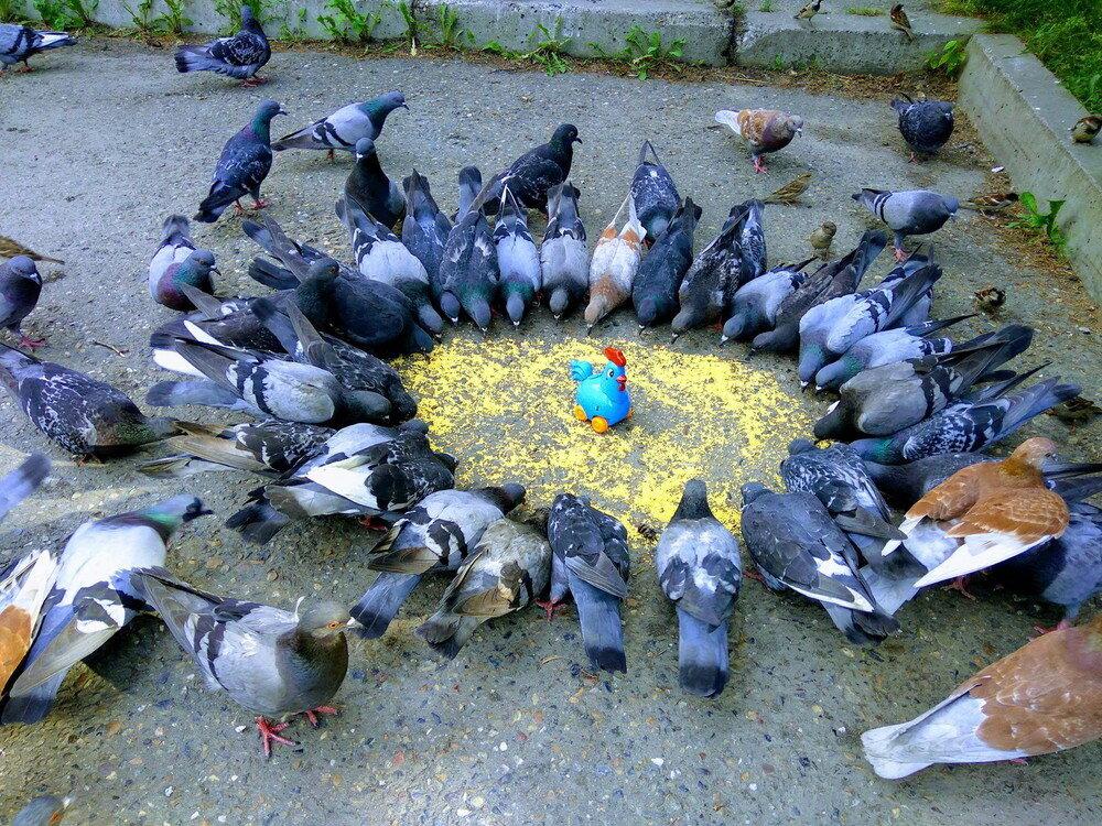 Смешная картинка голуби