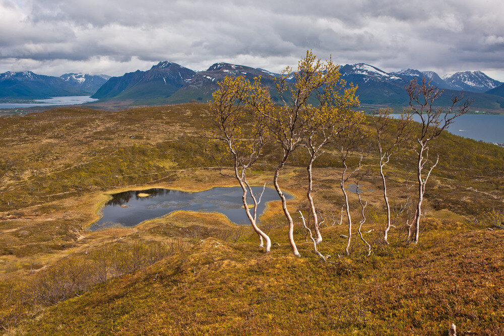 Тундра картинки природа