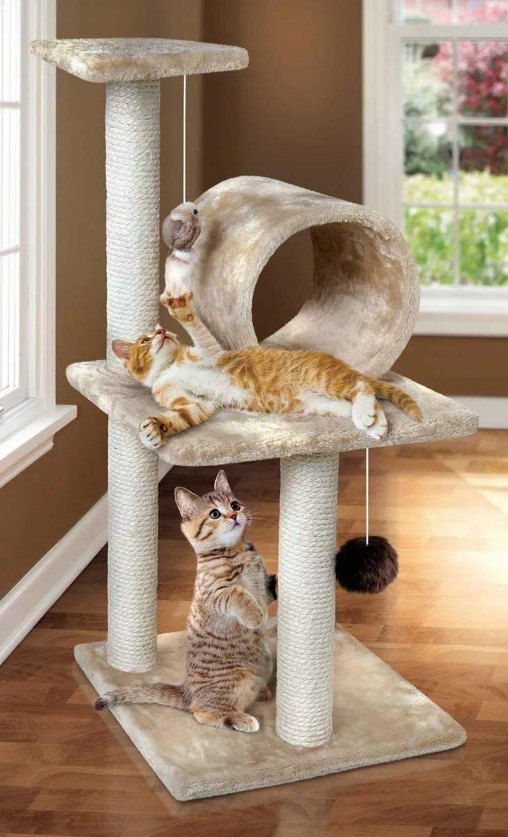 много картинки когтеточек для котят фотография