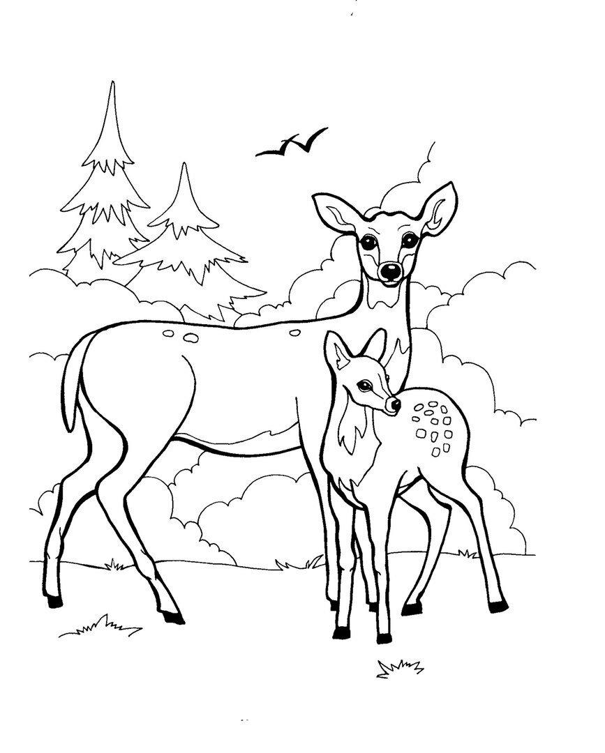 Картинки с оленем для раскраски