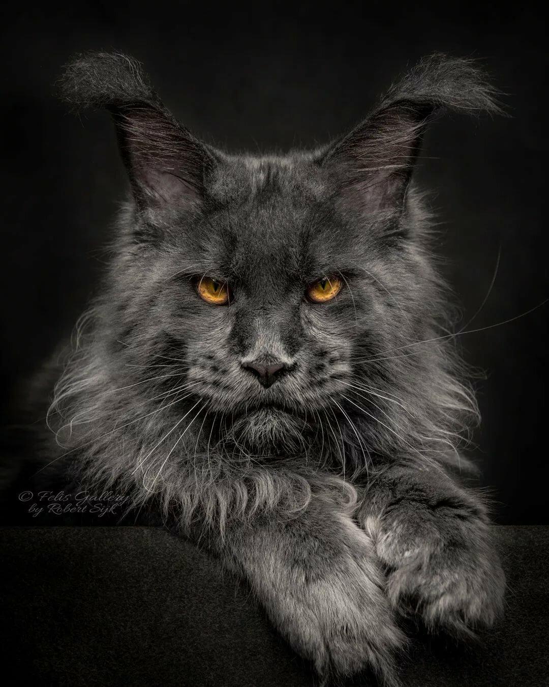 Грозные кошки картинки