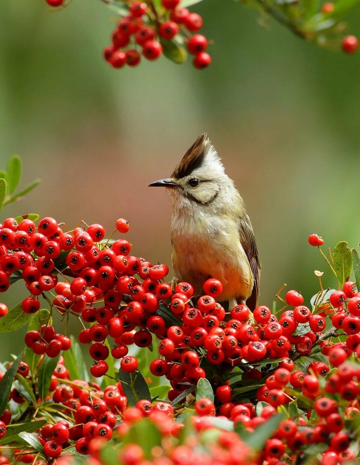 Птицы фото для смартфона
