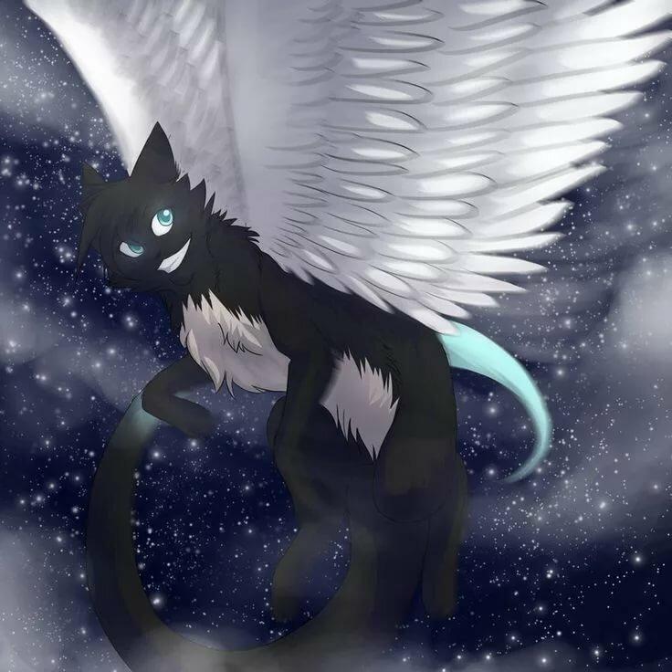 биткоина смотреть картинки котов с крыльями арты совсем