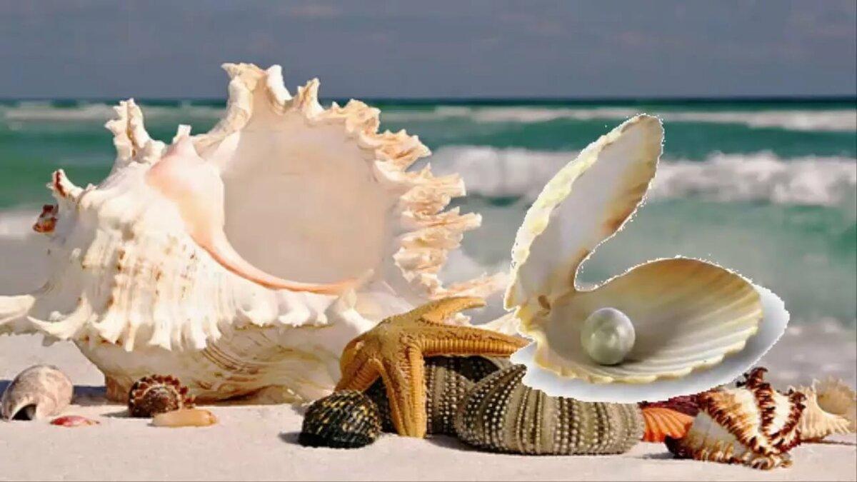 море ракушки с жемчугом картинки