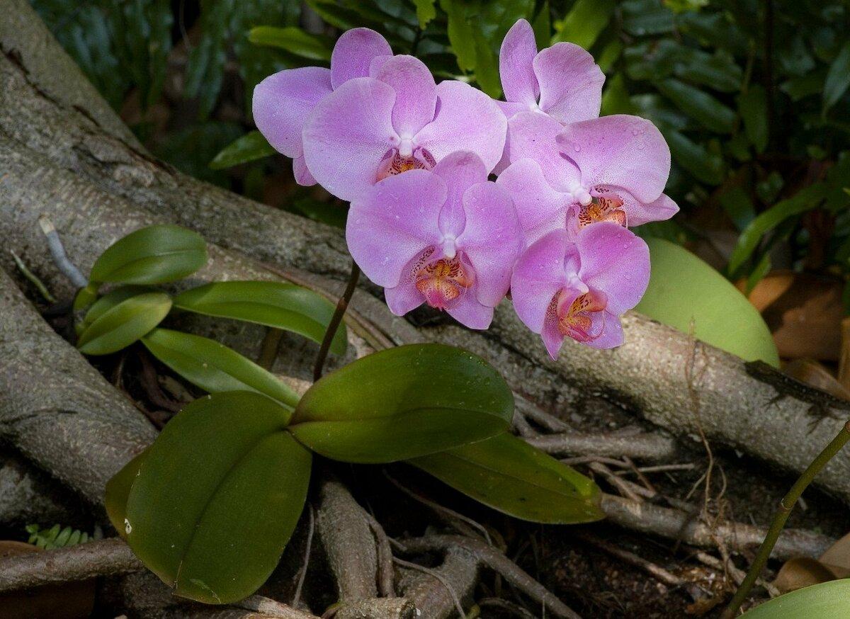 фото орхидей в тунисе этого надо было