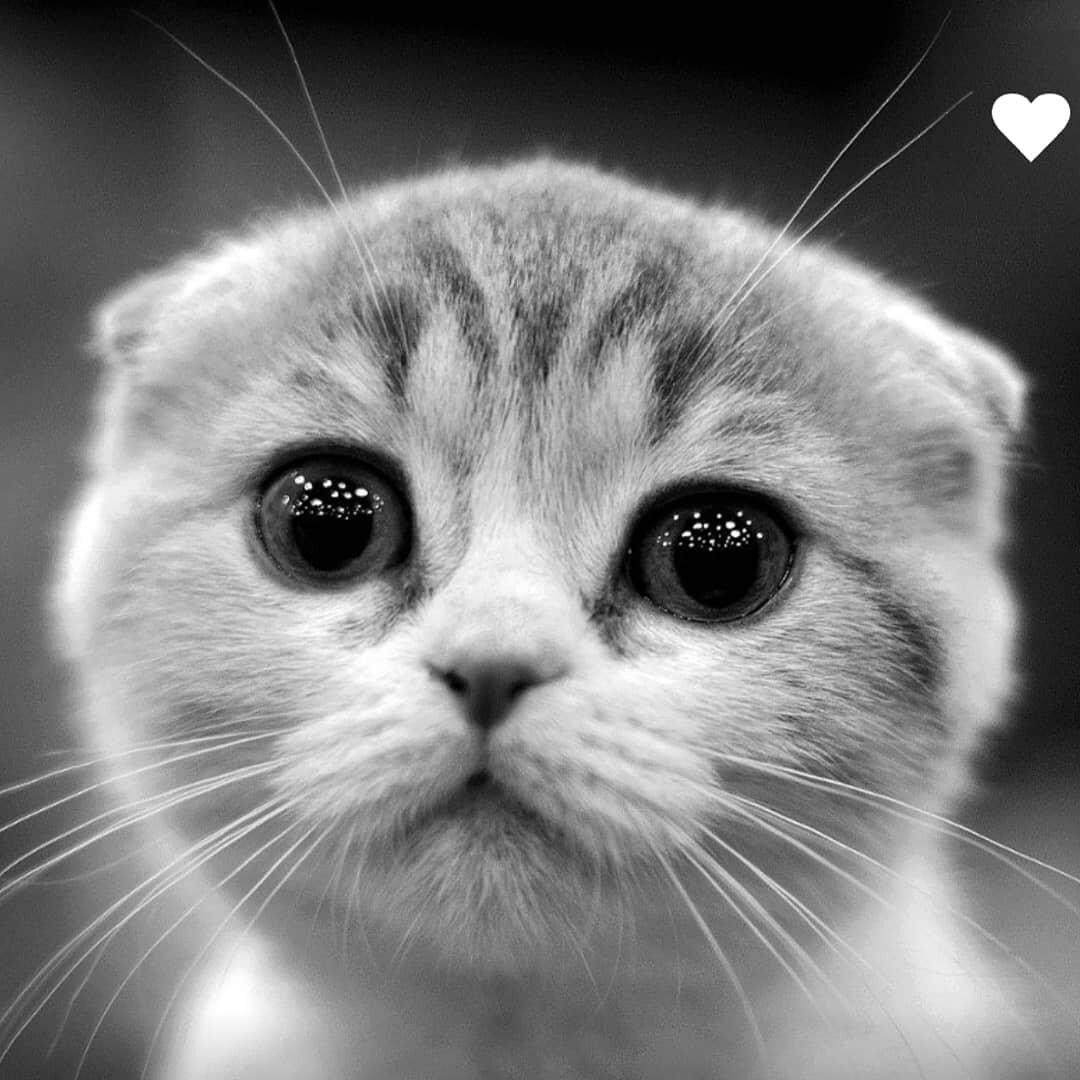 картинки с умоляющими котиками аутфита выбирайте