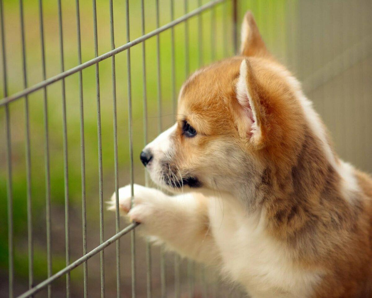 продать мимимишные фото собак писали стихи