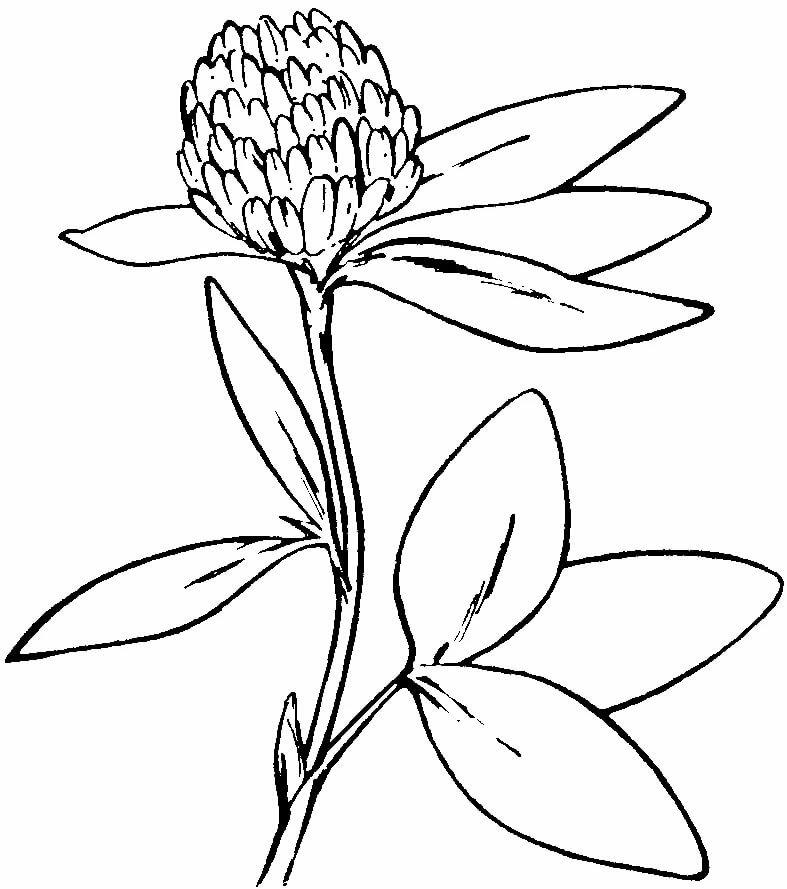 которые лечебный цветок рисунок екранів телевізорів