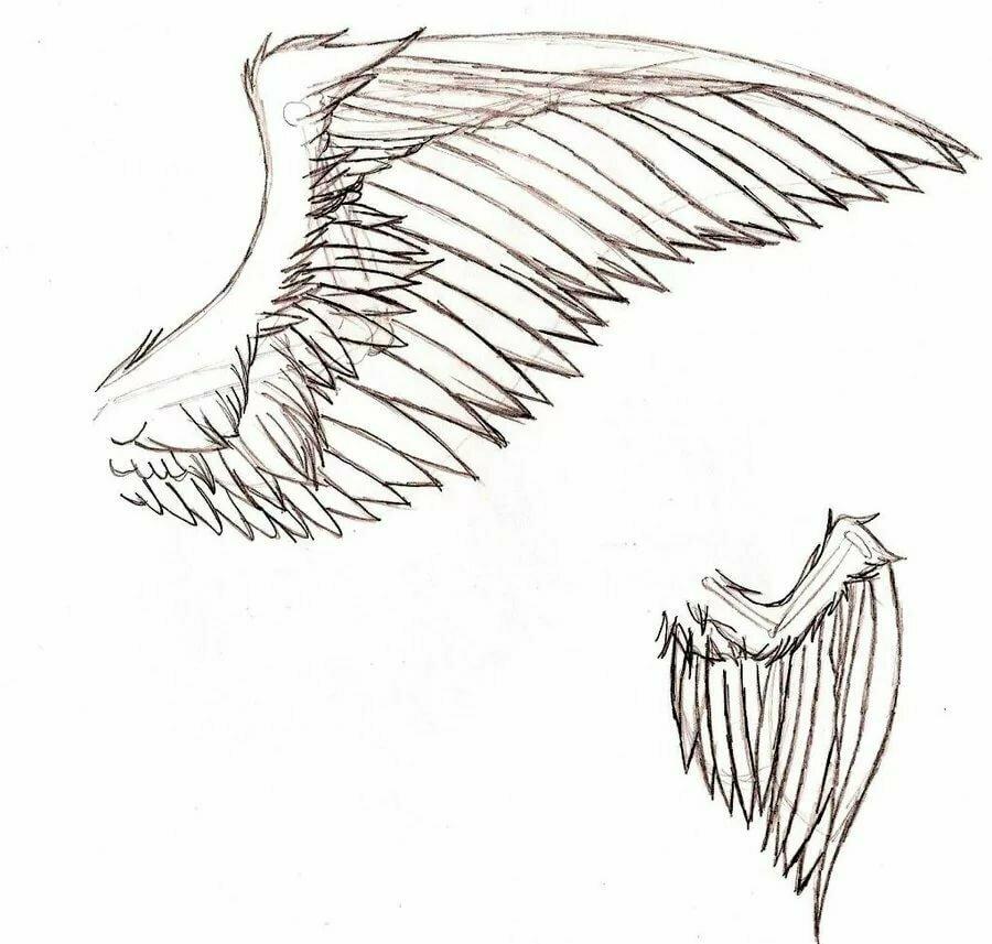 начинайте крылья рисунок карандашом всю свою жизнь