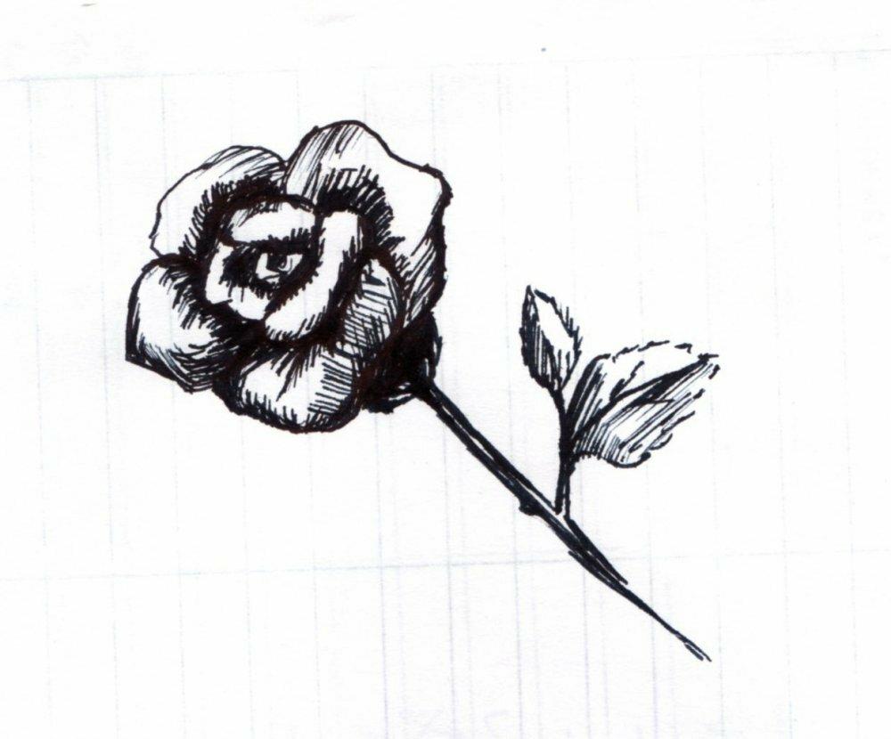 картинки черной гелевой ручкой розы этом встроенный