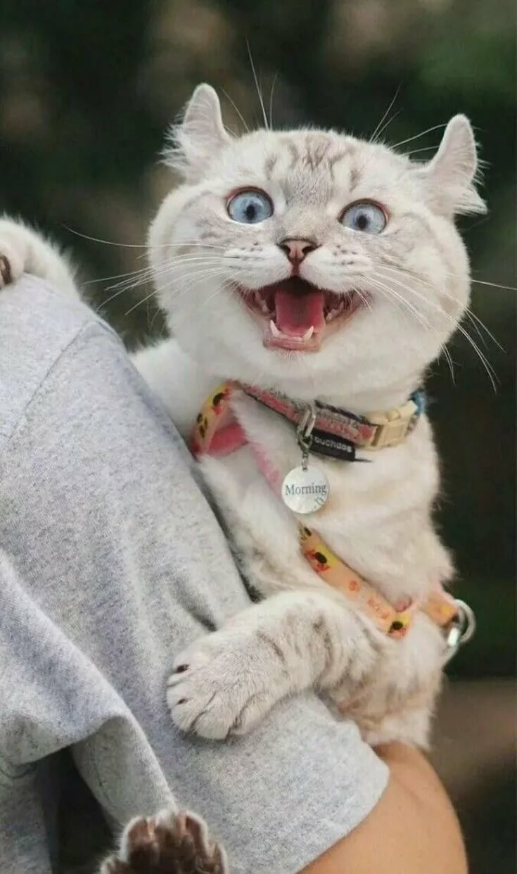 Пин от пользователя MariaNi на доске Кошаки Смешные животные, Кошки и Сумасшедшие кошки