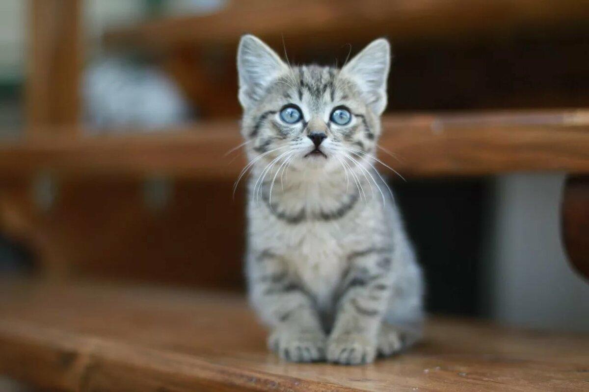 последнее время сидящий котенок картинки был